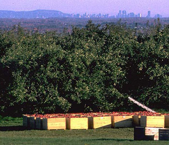 View of Montreal across apple orchards on Covey Hill along the USA Canada border
